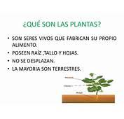 Las Plantas Y Sus Caracteristicas