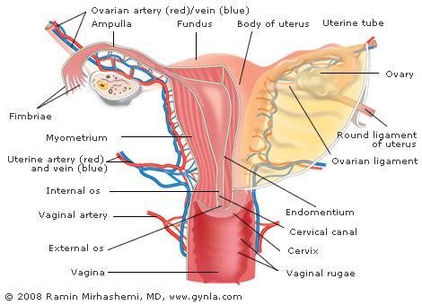 sections of the uterus minimally invasive uterine cancer treatment less pain
