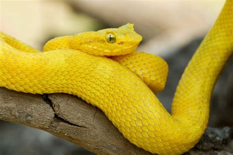9 gorgeous snake species from around the world mnn