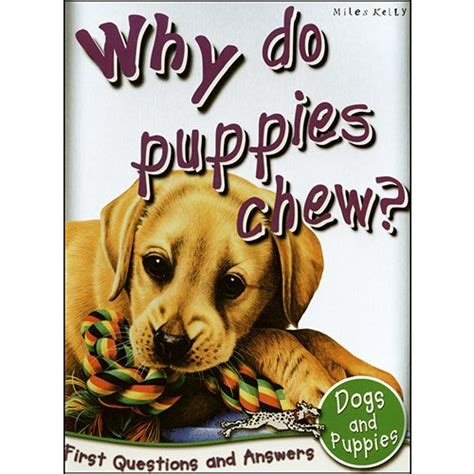 why do puppies chew why do puppies chew book discover the answer to lots of brilliant questions about