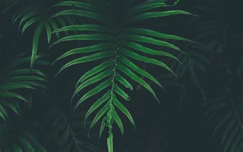 nw leaf tree dark nature wallpaper
