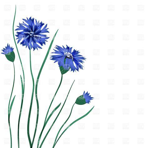 Blue Cornflower Www Pixshark Com Images Galleries With