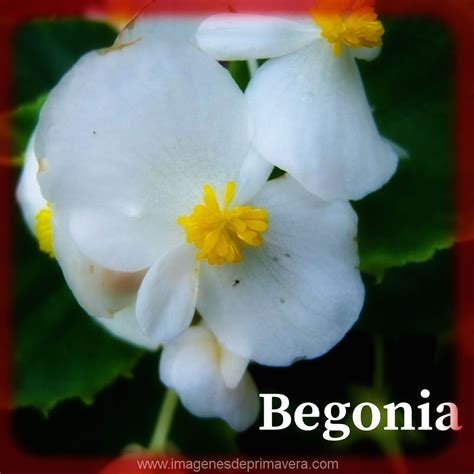 imagenes flores y nombres lista de nombres de flores de primavera para conocer