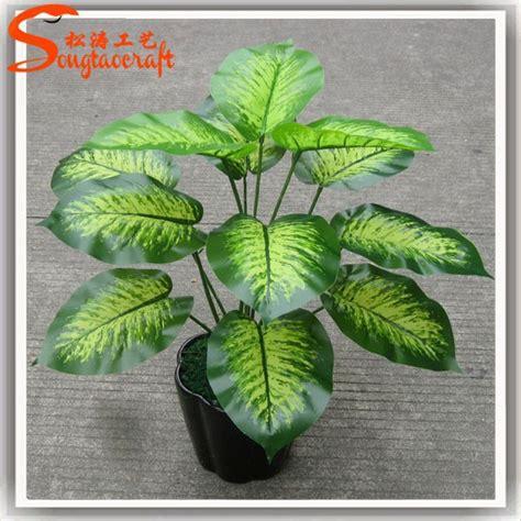 vasi per piante acquatiche nomi di piante vasi per le piante di plastica piante