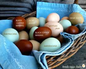 color eggs a rainbow of egg colors what breed of chicken lays which