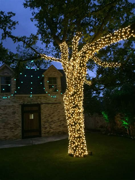 lights tree wrap wrapped tree lights dallas landscape lighting