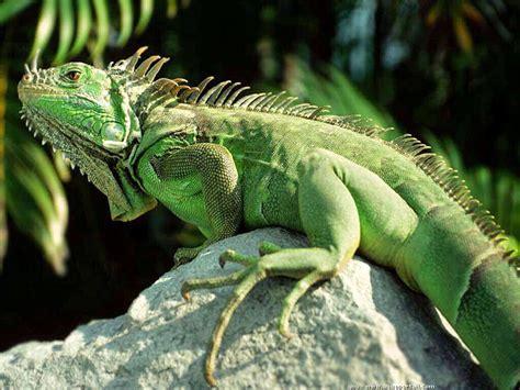 Reptile L reptile d 233 finition et explications