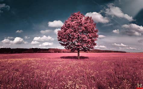 girly autumn wallpaper beautiful beautiful beautiful fall desktop wallpaper