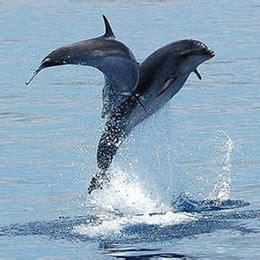 catamaran delfin playa gran canaria error