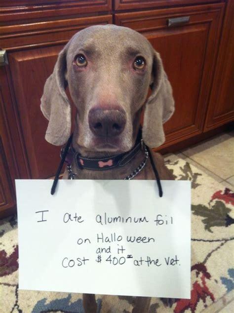 ate aluminum foil quot i ate aluminum foil on it cost 400 00 at the vet quot shaming