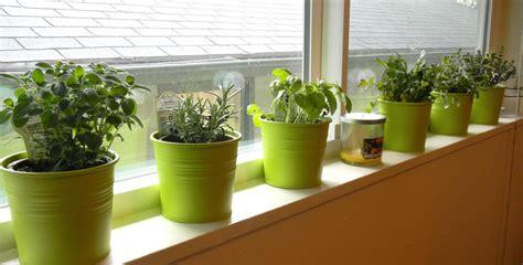 Windowsill Herb Garden Small Space Gardening Honeysuckle