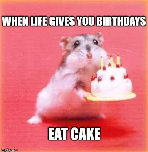 Meme Birthday - best 25 happy birthday ideas on pinterest happy