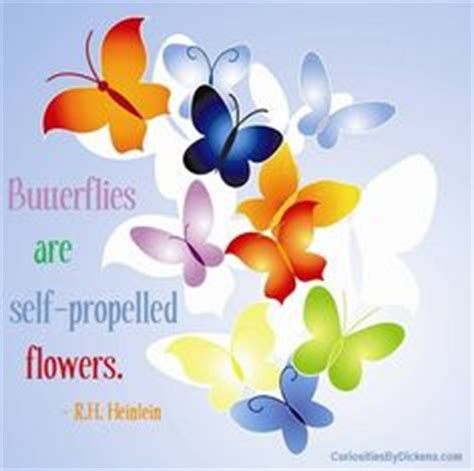 sle software quotation 1000 images about butterfly quotes on