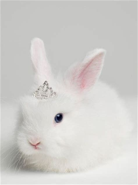 Bunny White a white rabbit with blue wearing diamonds it