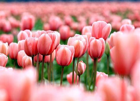 wallpaper gambar bunga indah gambar wallpaper bunga cantik indah caption instagram