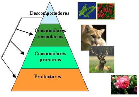 cadena trofica hormigas 201 tica y transformaci 243 n del entorno mayo 2014