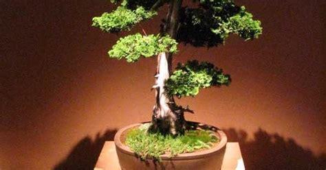 Tanaman Hias Artifisial Bonsai Bentuk Huruf Home 1 Set beberapa bentuk dasar bonsai indonesia centralbonsai berbagi ilmu tanaman bonsai