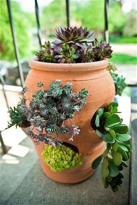 Strawberry Planters For Sale by 17 Best Ideas About Strawberry Pots On Plant