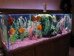 Fish Decorations For Home by Tips To Get Cool Fish Tanks