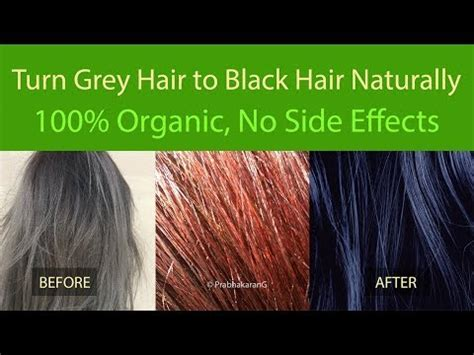 gray hair turning dark again how to turn grey hair to black hair in 2 days 100 natural