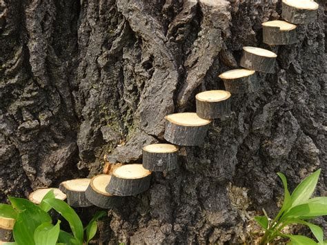 made from trees clever idea from my husband steps to tree stump fairy