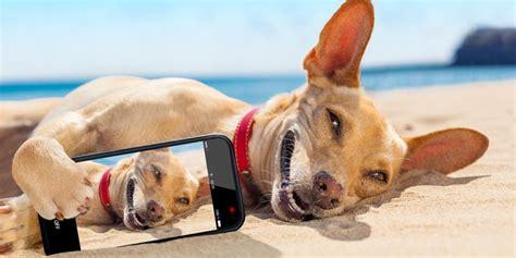 fotos comicas en la playa playas para perros en espa 241 a 2016