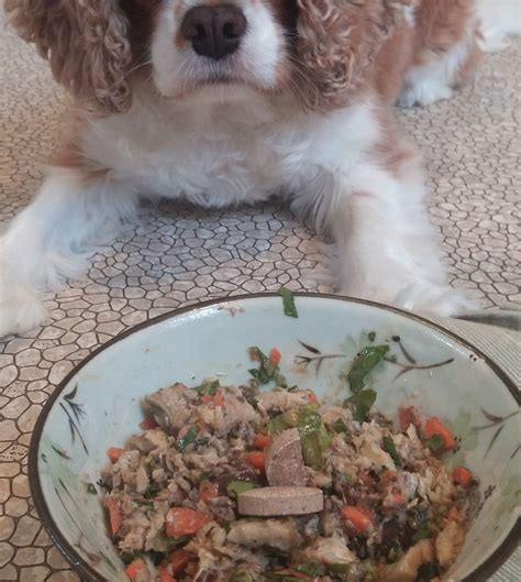 sardines for dogs food sardine and liver meal recipe all recipes uk