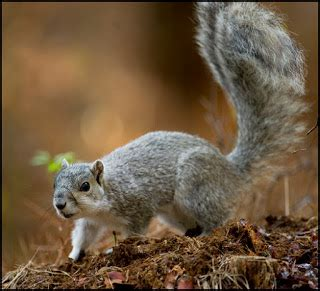 the news for squirrels squirrel facts the endangered