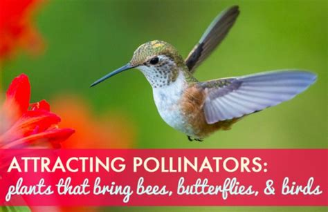 attracting butterflies and hummingbirds to your backyard plants which attract the butterflies and bees the most for