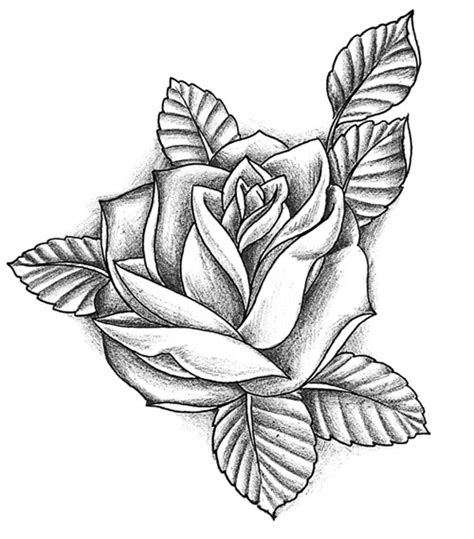 rose tattoo gallery disegni ideatattoo