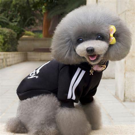 Jaket Dc Batik Logo Black adidog baju jaket hoodie anjing size s black jakartanotebook
