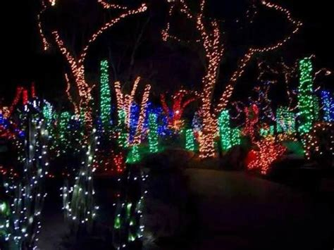 holiday lights at the cactus garden picture of ethel m