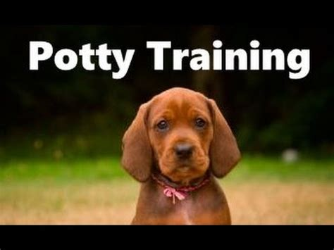 easiest dogs to house train how to potty train a redbone coonhound puppy house