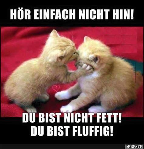 Best 20  Süße katzen bilder ideas on Pinterest   lustige