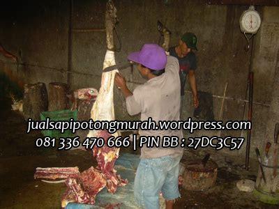 Jual Bibit Sapi Limosin Jakarta produk sapi potong peternakan sapi jual sapi murah
