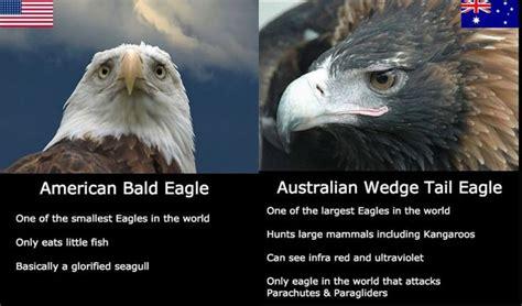 Bald Eagle Meme - 25 best ideas about bald eagle meme on pinterest