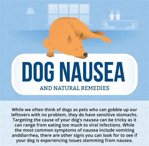 How Can I Stop Nausea While Detox From by Nausea Remedies Canna Pet 174