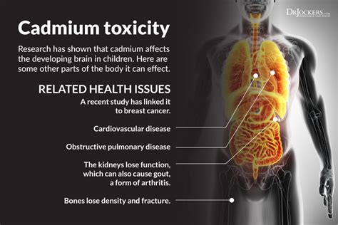 Heavy Metal Cadmium Detox by How To Detox Heavy Metals Drjockers