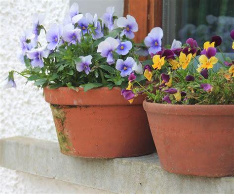 vasi terracotta da giardino vasi vasi da giardino