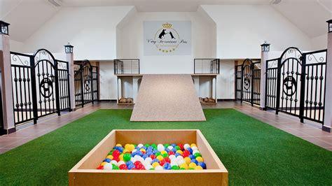 vip pets    star dog hotel kindergarten