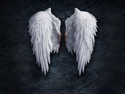 libro on angel wings крылья ангела обои ангелы