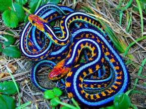 colorful snake 17 best ideas about colorful snakes on