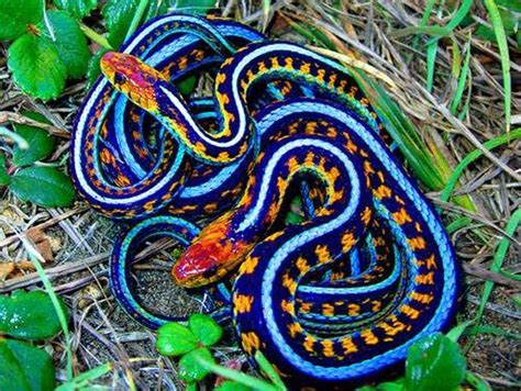 snake colors colorful snakes work of nature