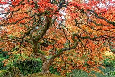 living portland japanese garden aaron reed luxury