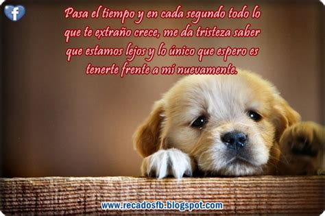 imagenes extrañas con frases gallery for gt te extra 195 177 o frases