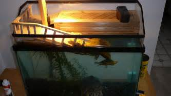 Do You Need A Uvb Light For Turtles 2017   Fish Tank Maintenance