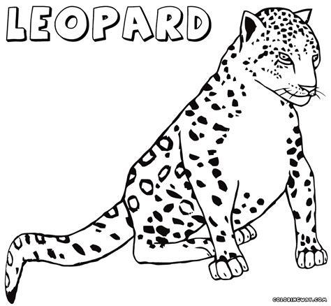 Printable Snow Leopard Pictures