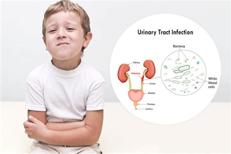 uti dehydration infectious diseases patient education