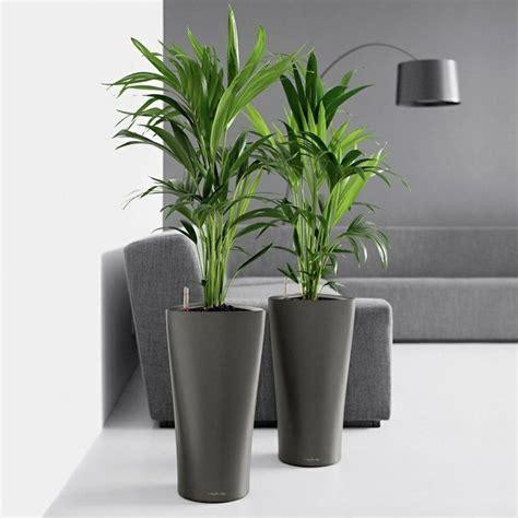 palme wohnzimmer zimmerpalmen bilder welche sind die typischen palmen