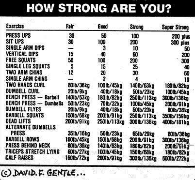 average bench press chart how strong are you possible poundages